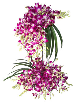 2 Tier Orchids
